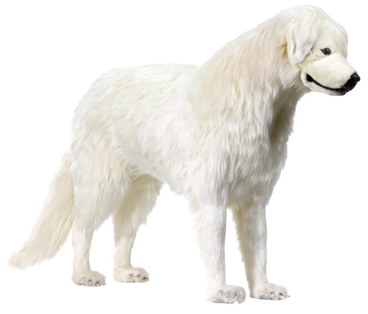 Anima Pyrenäen Berg Hund Belle stehend 140cm Lang 90cm Hoch in Lebensgröße auch Sitz