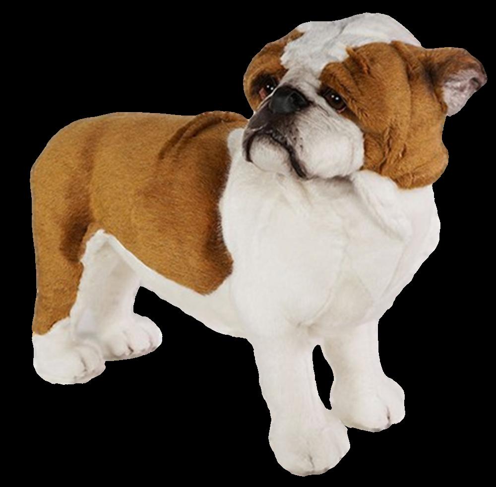 Diese Plüsch-Bulldogge gehört zu einer siebenköpfigen Familie, die von den Meistern der italienischen Piutrè hergestellt wurde. Es handelt sich um ein Studio-Modell in Originalgröße, das für Realismus und Stabilität um einen Stahlrahmen gebaut wurde.